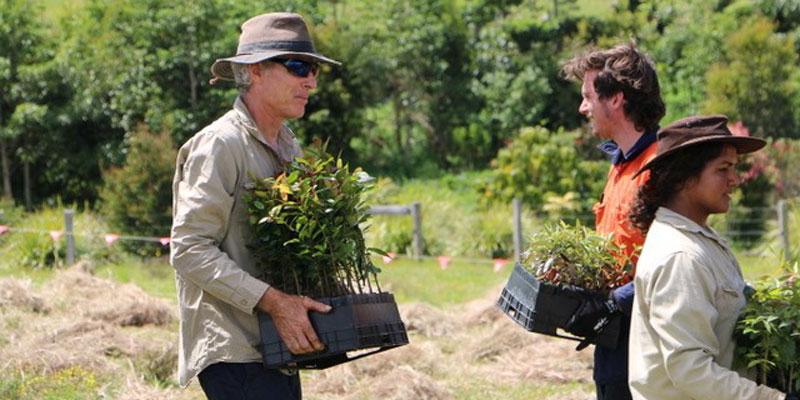 Zero Emissions Byron Bay Planting Trees